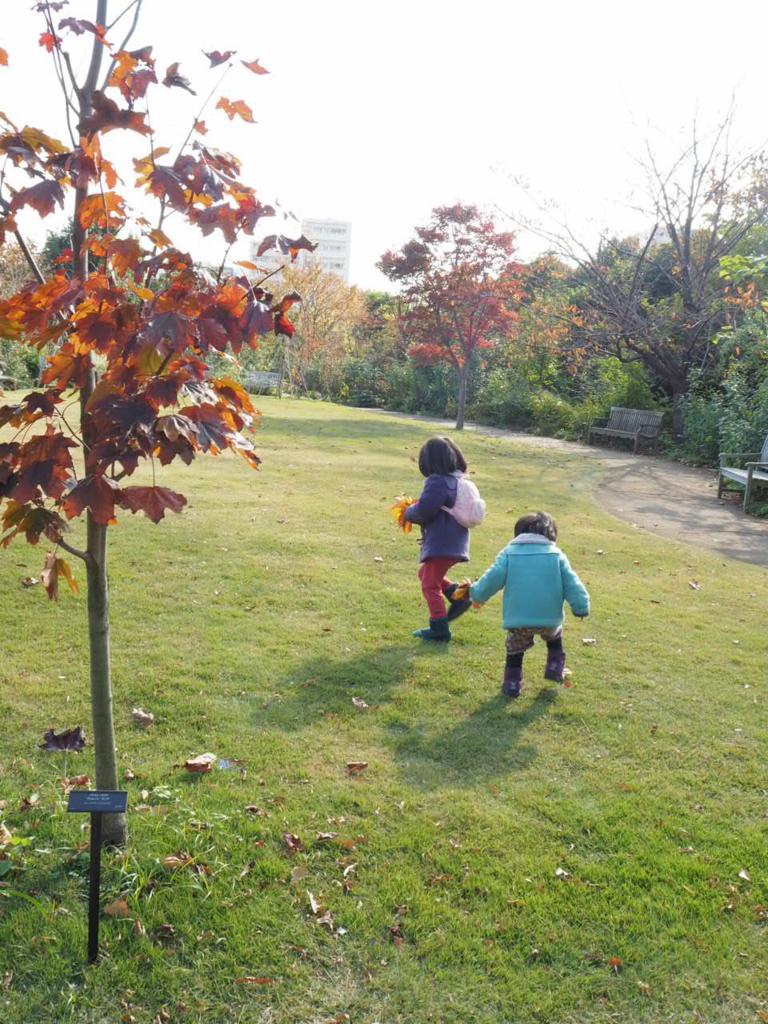 f:id:m-garden-life:20161025175332j:plain