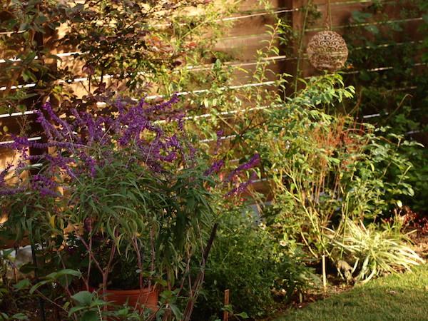 f:id:m-garden-life:20161028150855j:plain