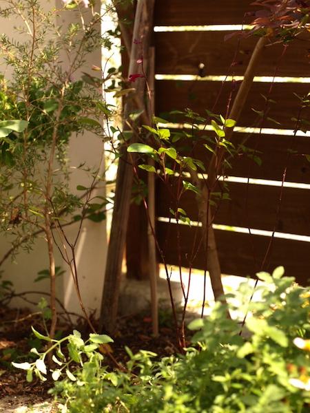 f:id:m-garden-life:20161030130022j:plain