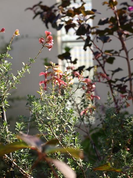 f:id:m-garden-life:20161105101938j:plain