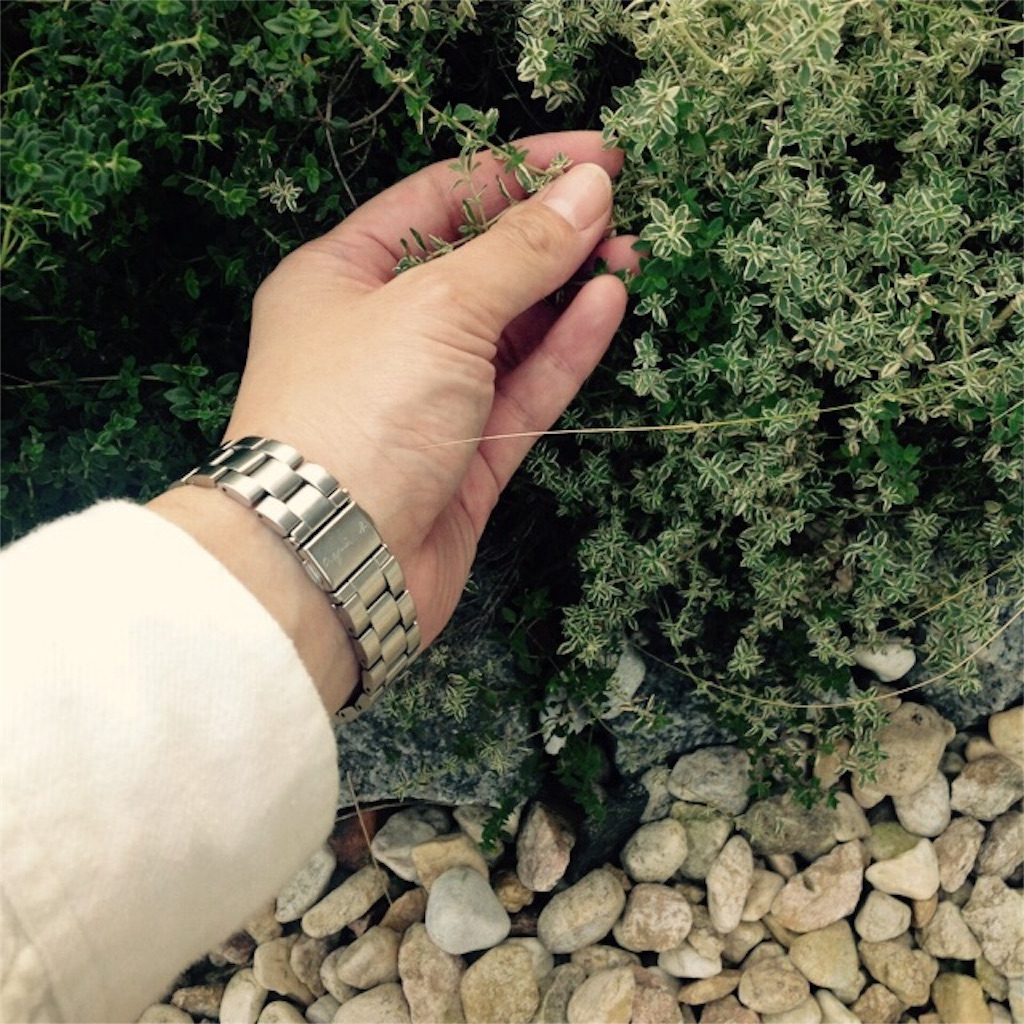 f:id:m-garden-life:20161107153008j:image