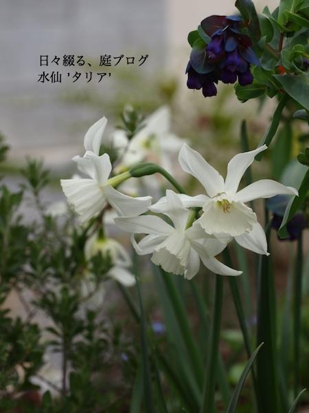 f:id:m-garden-life:20161110050603j:plain