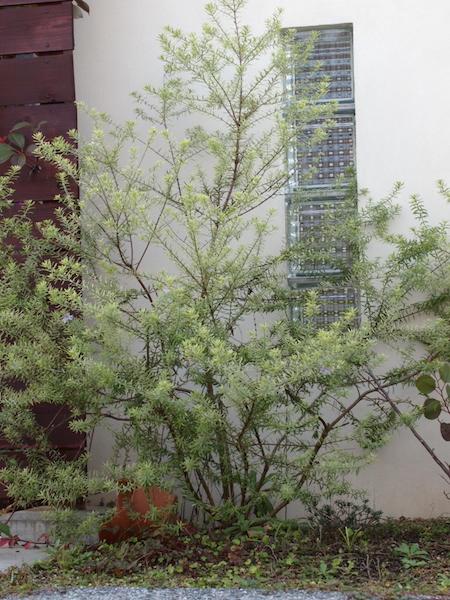 f:id:m-garden-life:20161122160950j:plain