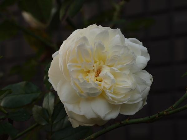 f:id:m-garden-life:20161122161620j:plain