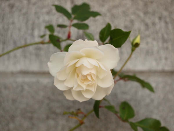 f:id:m-garden-life:20161201045403j:plain
