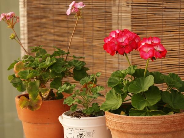 f:id:m-garden-life:20161203163321j:plain