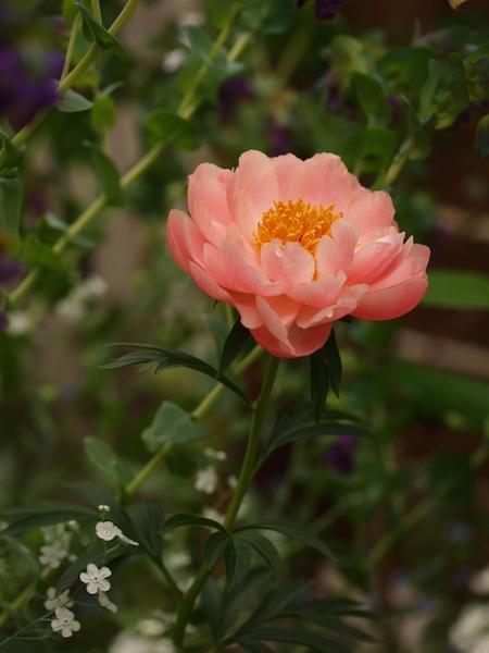 f:id:m-garden-life:20161205035642j:plain