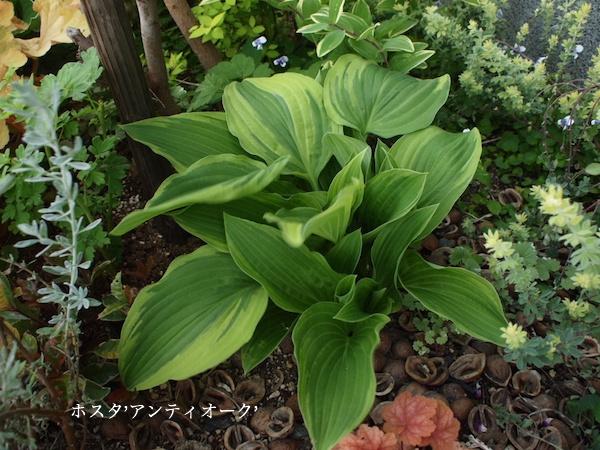 f:id:m-garden-life:20161205035924j:plain