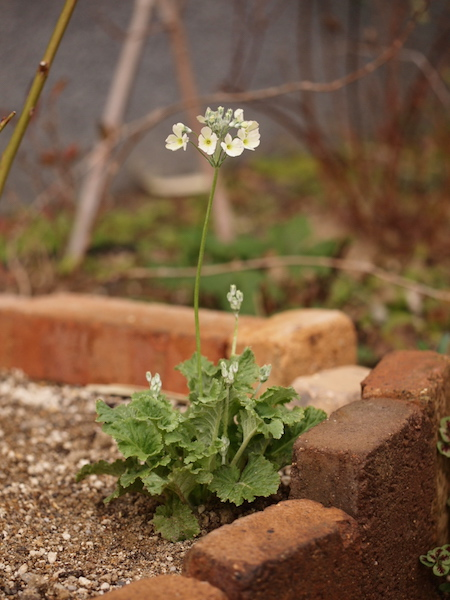 f:id:m-garden-life:20161208163801j:plain