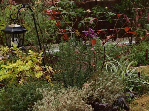 f:id:m-garden-life:20161213162347j:plain