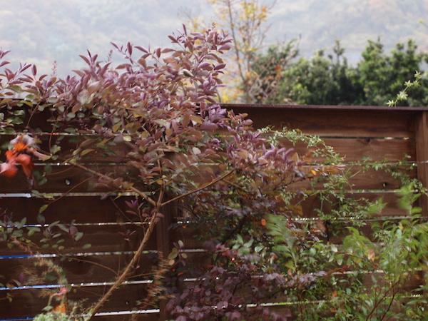 f:id:m-garden-life:20161213162441j:plain