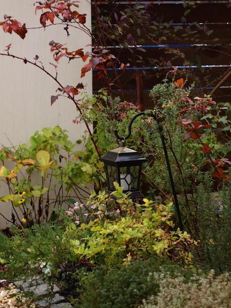 f:id:m-garden-life:20161213163458j:plain