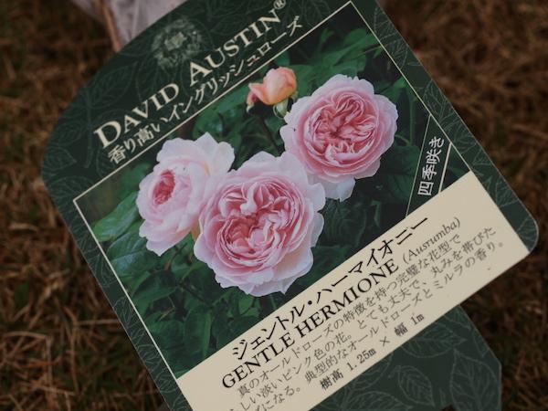 f:id:m-garden-life:20161217133811j:plain