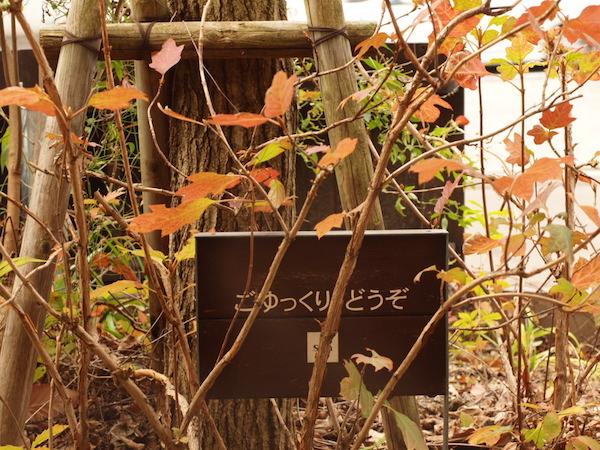 f:id:m-garden-life:20161217134127j:plain