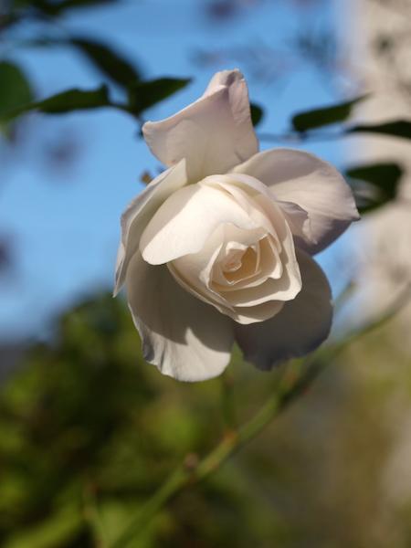 f:id:m-garden-life:20161219153404j:plain