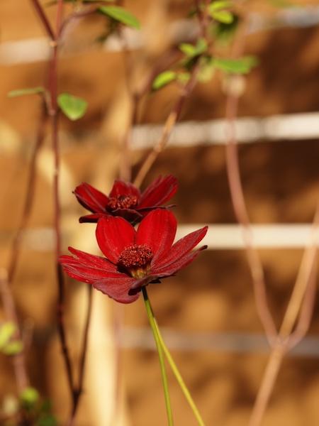 f:id:m-garden-life:20161219153836j:plain