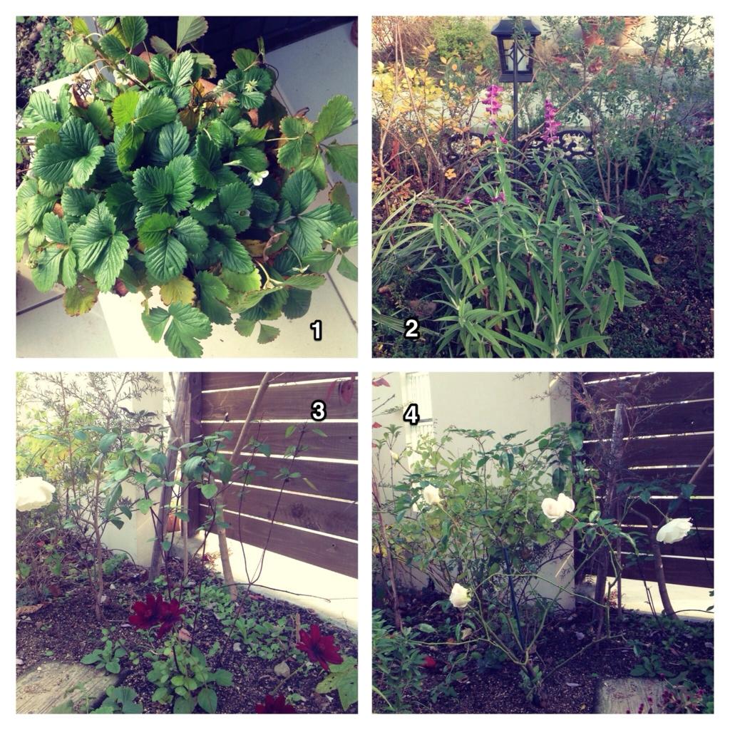 f:id:m-garden-life:20161224100411j:plain