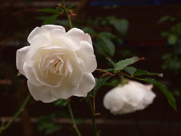 f:id:m-garden-life:20161228102956j:plain