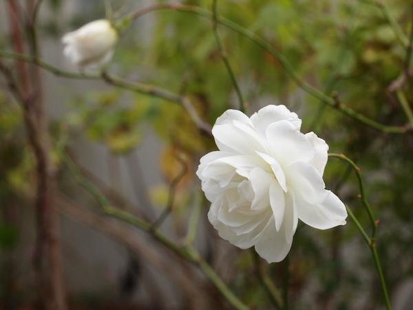 f:id:m-garden-life:20170102113257j:plain