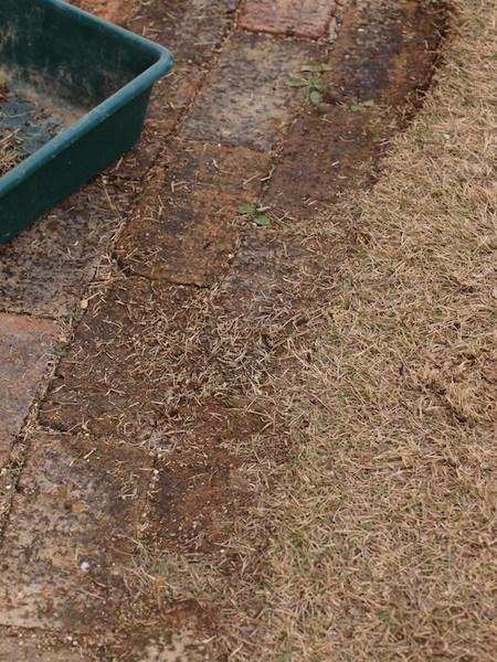 f:id:m-garden-life:20170107130334j:plain