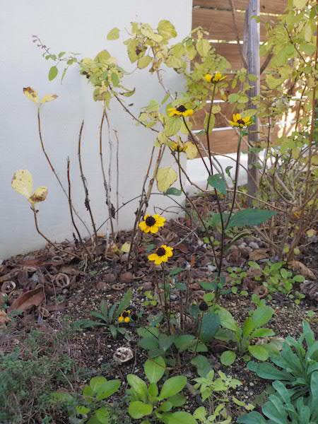 f:id:m-garden-life:20170111163351j:plain