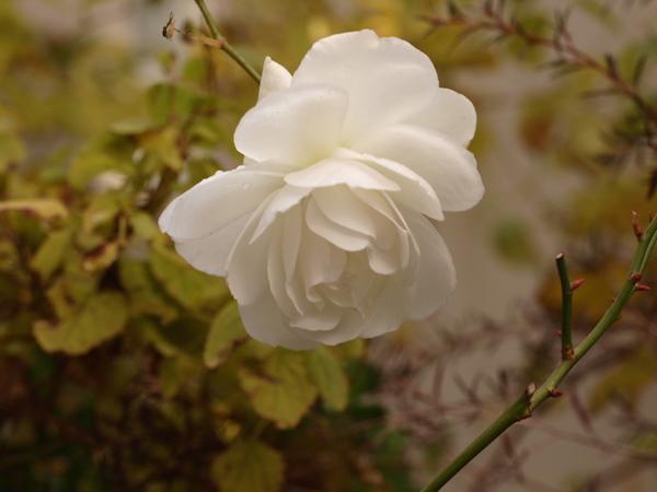 f:id:m-garden-life:20170115102657j:plain