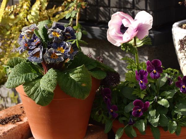 f:id:m-garden-life:20170115102726j:plain
