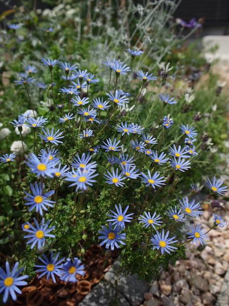 f:id:m-garden-life:20170201205430j:plain