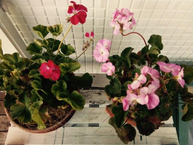 f:id:m-garden-life:20170210175903j:plain