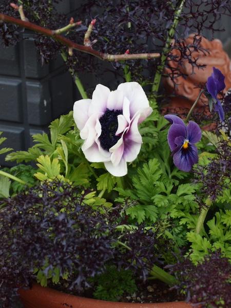 f:id:m-garden-life:20170216181258j:plain