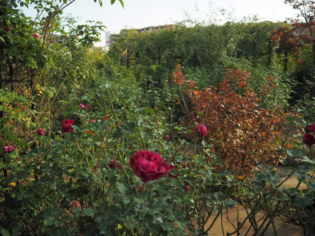 f:id:m-garden-life:20170218060714j:plain