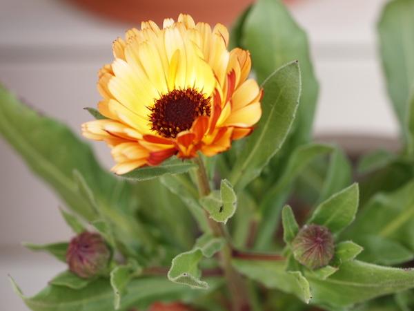 f:id:m-garden-life:20170228152940j:plain