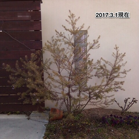 f:id:m-garden-life:20170301161725p:plain