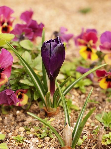f:id:m-garden-life:20170315161728j:plain