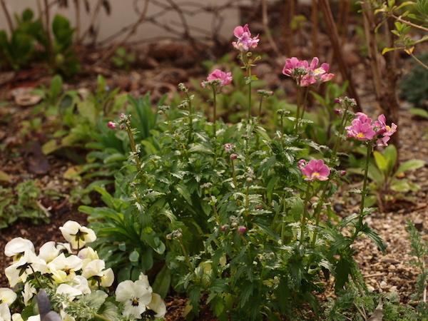f:id:m-garden-life:20170320141012j:plain