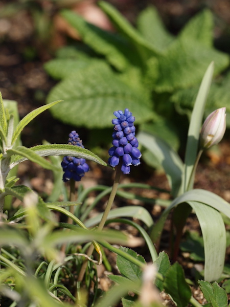 f:id:m-garden-life:20170322104538j:plain
