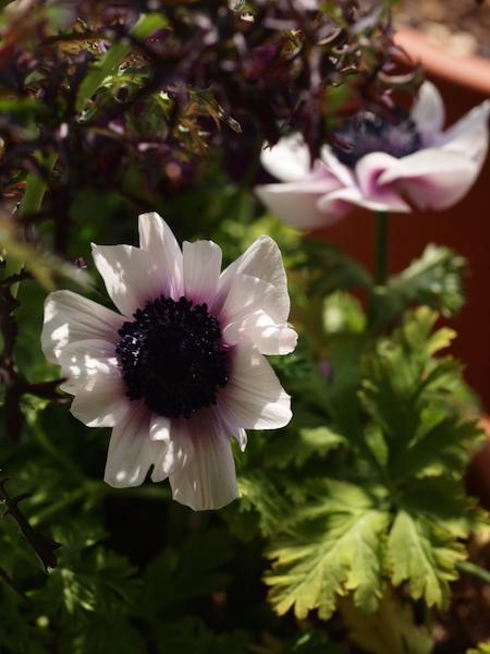 f:id:m-garden-life:20170322105607j:plain