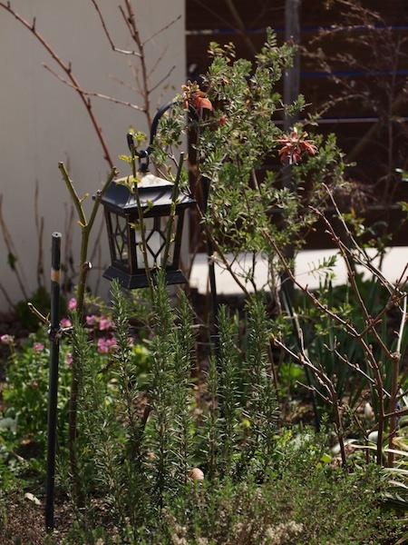 f:id:m-garden-life:20170322110242j:plain