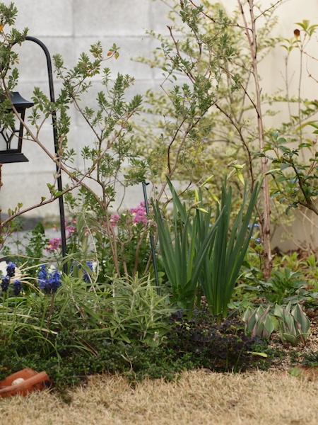 f:id:m-garden-life:20170330163523j:plain