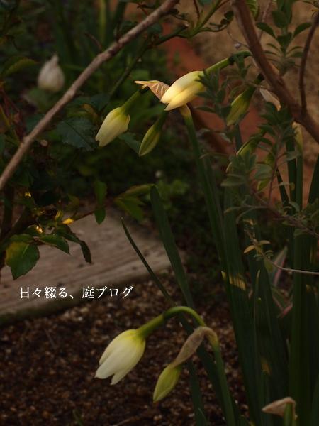 f:id:m-garden-life:20170402072109j:plain