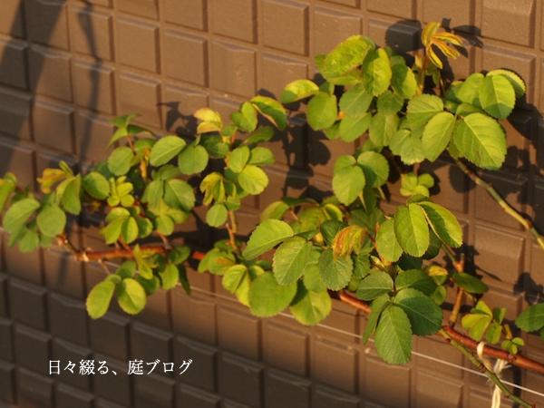 f:id:m-garden-life:20170402072606j:plain