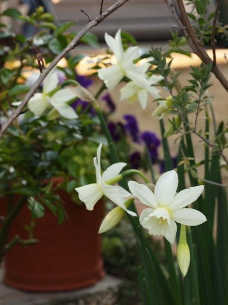 f:id:m-garden-life:20170403162034j:plain