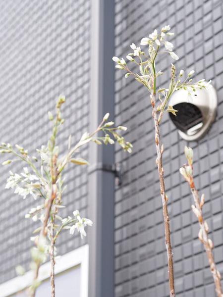 f:id:m-garden-life:20170411162549j:plain