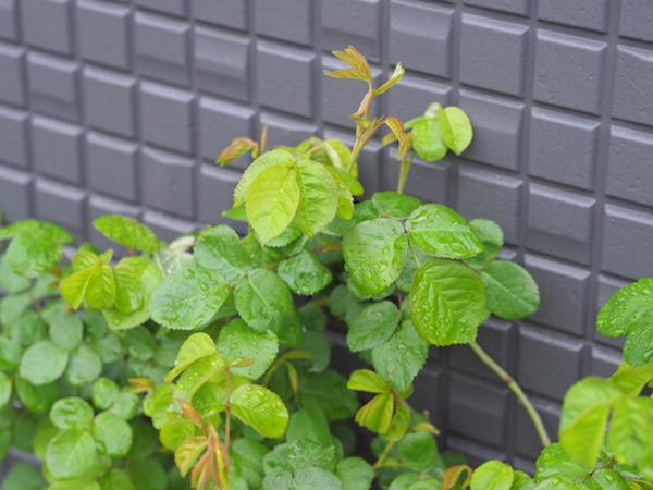 f:id:m-garden-life:20170411163045j:plain