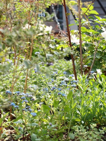 f:id:m-garden-life:20170412143619j:plain
