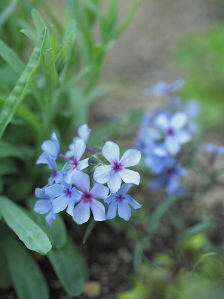 f:id:m-garden-life:20170414161425j:plain