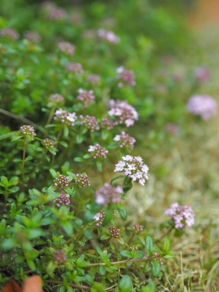 f:id:m-garden-life:20170414161804j:plain