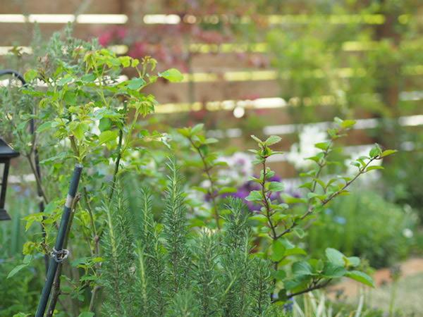 f:id:m-garden-life:20170414162000j:plain