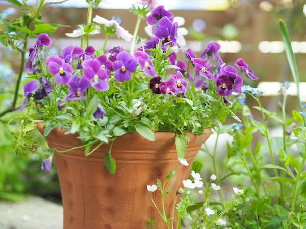 f:id:m-garden-life:20170414162555j:plain