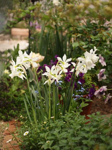 f:id:m-garden-life:20170415172028j:plain